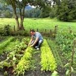 Jour 192 cultiver son jardin crisis what crisis la for Candide cultiver son jardin
